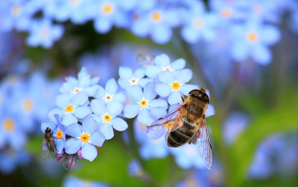 Ein Garten für Biene und Mensch als Beitrag zur Nachhaltigkeit