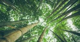 Bambus – die nachhaltige Alternative zu Holz und Plastik