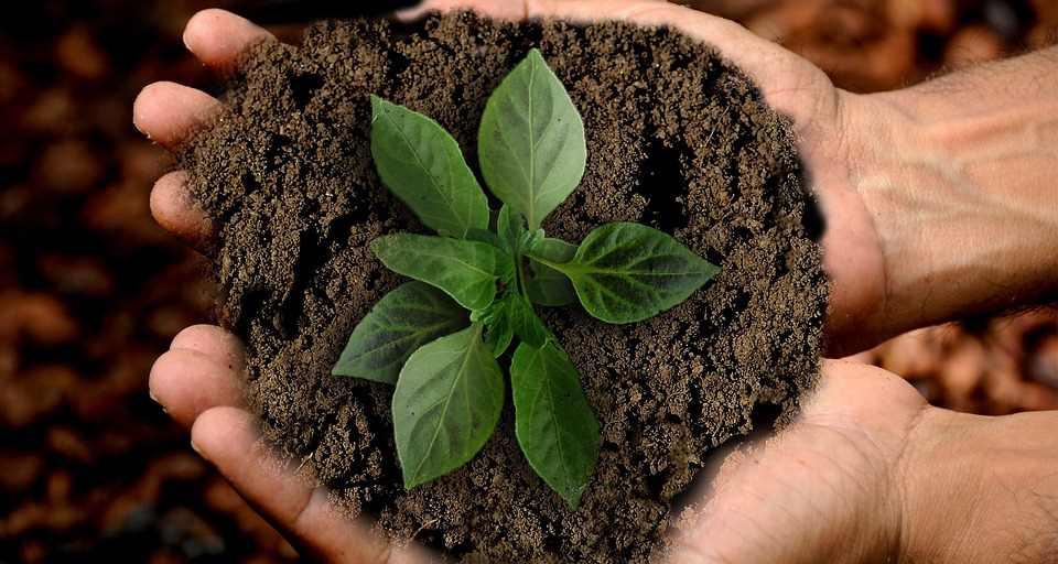 10 nachhaltige Aktien als Geldanlage