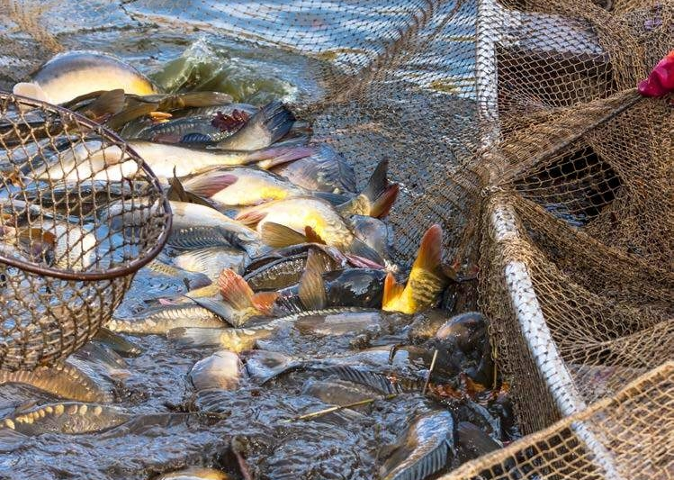 Die erschreckenden Auswirkungen der konventionellen Landwirtschaft & der industriellen Fischerei