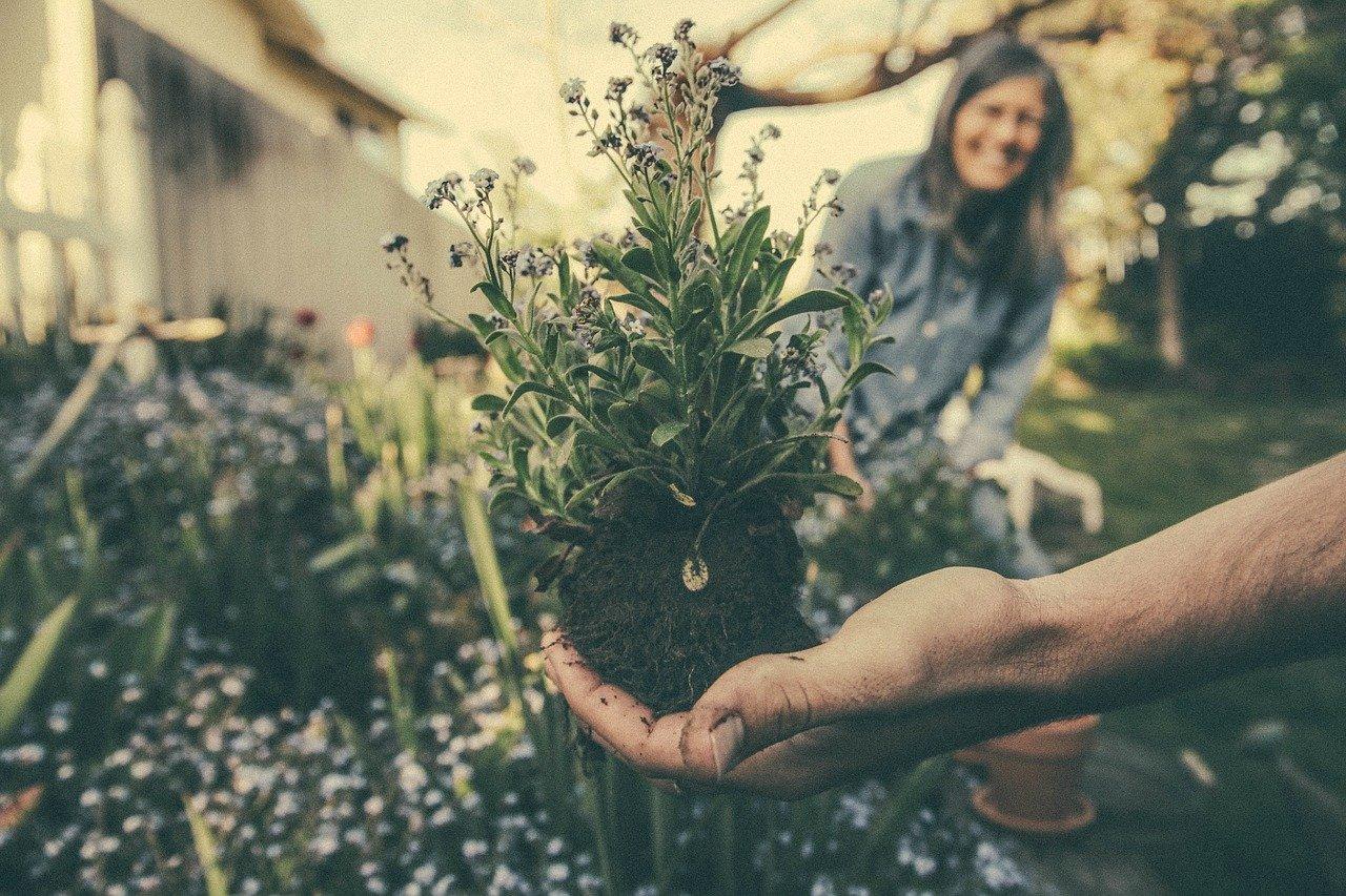 Den Garten nachhaltig gestalten