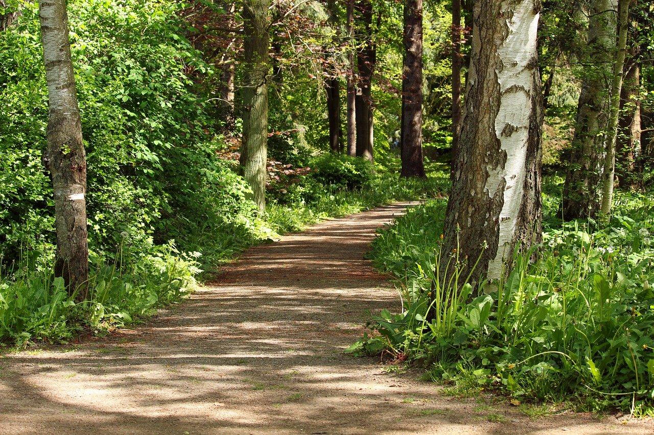 Erholsamer Spaziergang im Wald