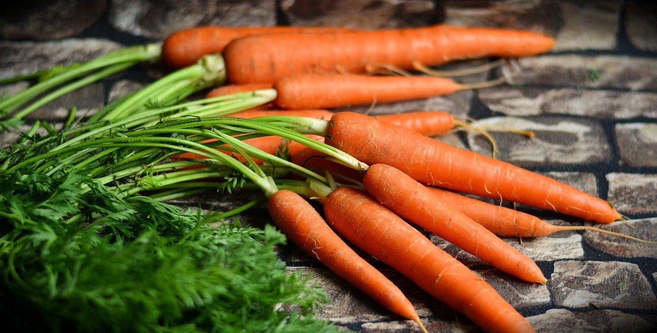 Karotten   nachhaltiges Nahrungsmittel mit gesundheitlichen ...
