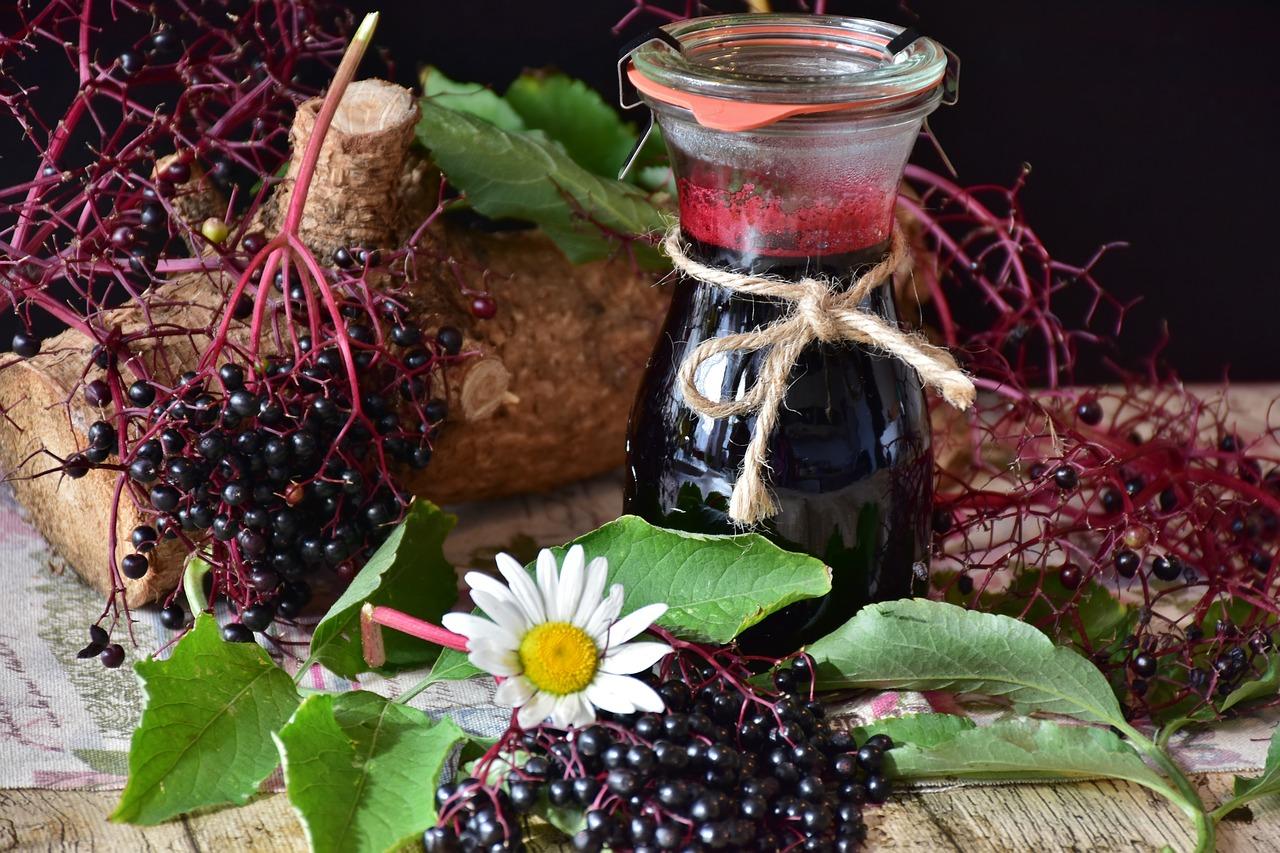 Mit antiviralen Pflanzen das Immunsystem stärken